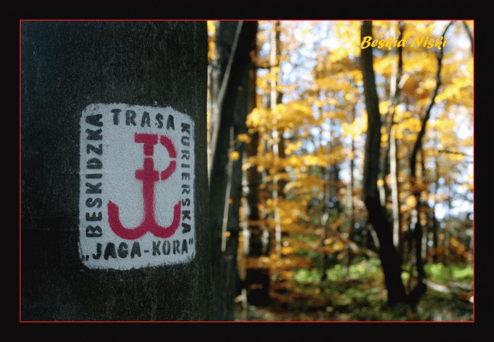 Pocztówka - JAGA-KORA - logo na drzewie - przód